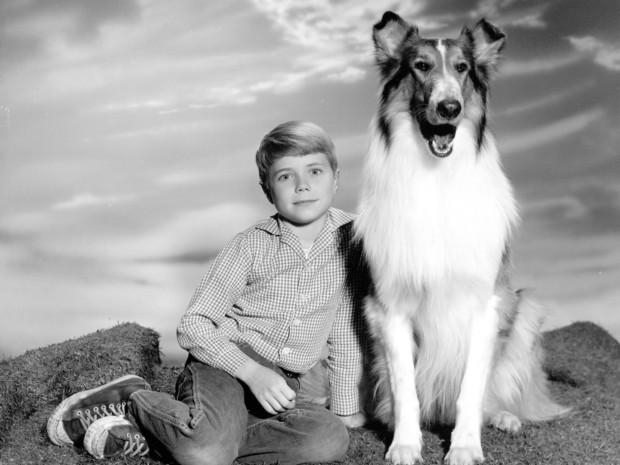 raça da lassie